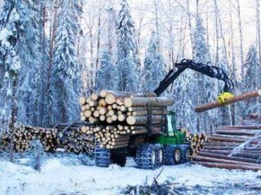 Сруб из бревен зимнего леса